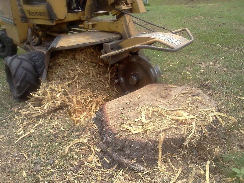 This is the business end fo a stump grinder getting started on a job.